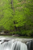 Great Smoky Mountains Spring Images!