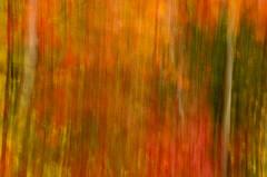 Splendor Of Color
