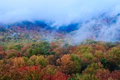 Shrouded Autumn