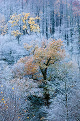 Snow, Light, And Color