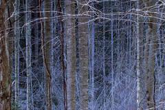 Deadwood in Bad Branch