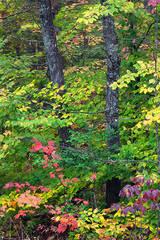 Koomer Ridge Color