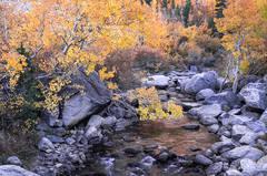 Autumn Along Bishop Creek
