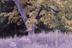 Black Creek Autumn
