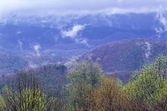 Spring storm, mist, spring scenic, Smoky Mountains, Jeremy Brasher, Jeremy Brasher Photography