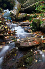 Small Stream Along Grotto Trail