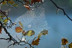 Morning Web Over Hematite