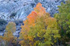 Inyo's Autumn