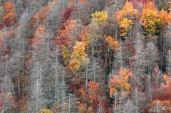 Last Colors of Autumn