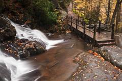 Trail Through Laurel Falls