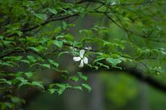 Last Bloom Standing