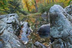 Autumn On McGilligan Creek