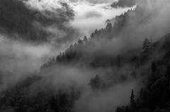 Storm Mist In Monochrome