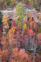 Autumn Eyes Of The Gorge