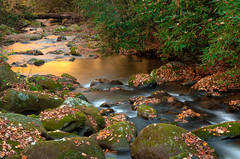 Warm Tones Of The Roaring Fork