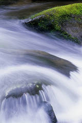 Great Smoky Mountains National Park, streams, moss, silky-water effect,