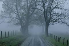 Shrouded Fog