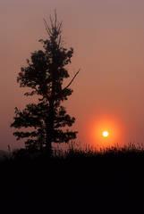 Perryville Battlefield State Historic Site, Kentucky, Jeremy Brasher, jeremybrasher.com, morning photo, scenic,