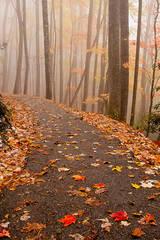 Early Light And Autumn Fog
