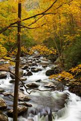Autumn Rapids of Tremont