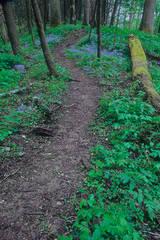 Springtime Trail