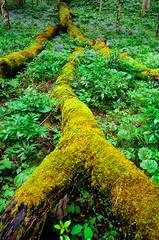 White Oak Sink Mosses