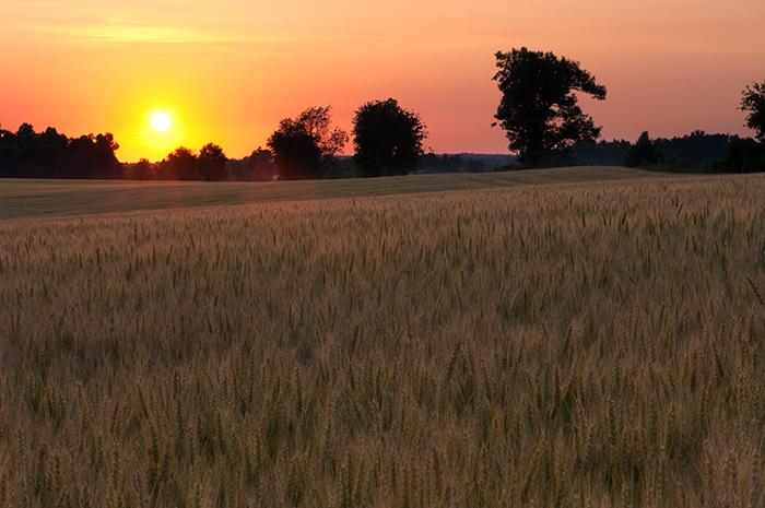 wheatfield, Caldwell County, Fredonia photo, Jeremy Brasher, photo