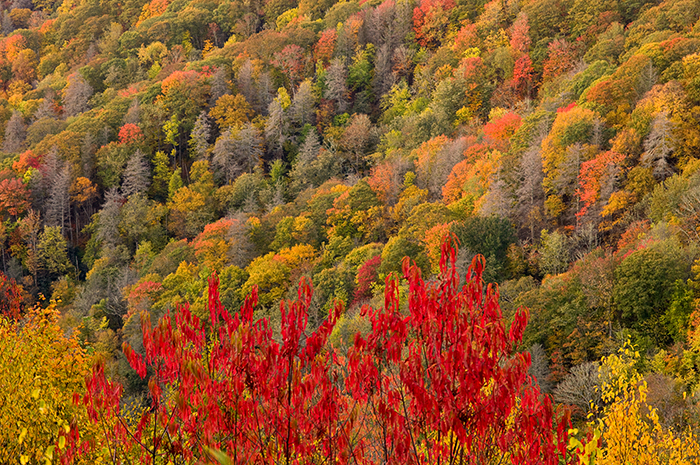Great Smoky Mountains National Park, fall, autumn, foliage, Deep Creek Overlook, jeremy brasher  , photo
