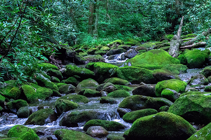Roaring Fork, Great Smoky Mountains, Stream, Green Mosses, Jeremy Brasher, photo