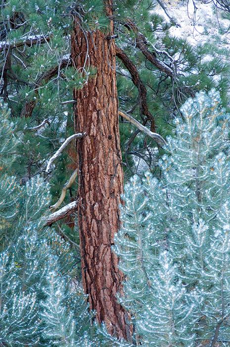 Inyo National Forest, California landscape, Easter Sierra, Jeremy Brasher, Jeremy Brasher Photography