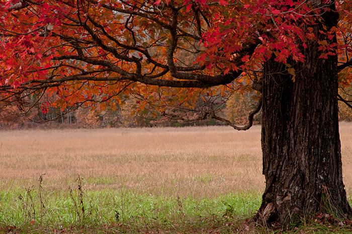 This image is probably my most favorite in the gallery. The simplicity of the scene, the autumn color, and the composition...