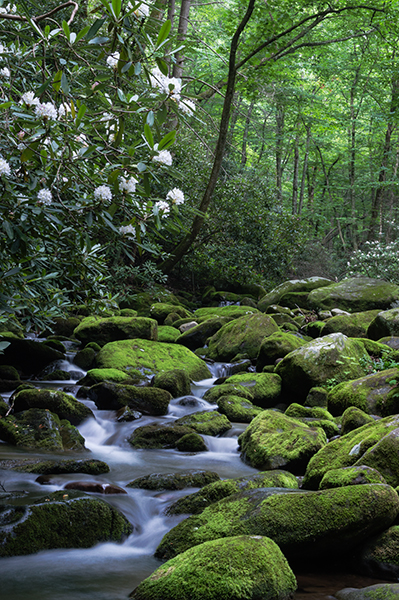 Roaring Fork, White Rhododendrons, Stream, , photo