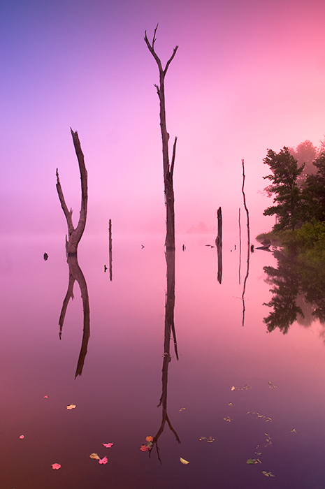Land Between the Lakes, fog, Duncan Lake, reflection, photo